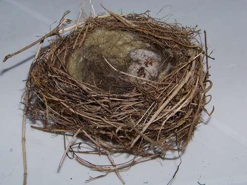 Bird'S Nest Nest Nesting Place Hatchery