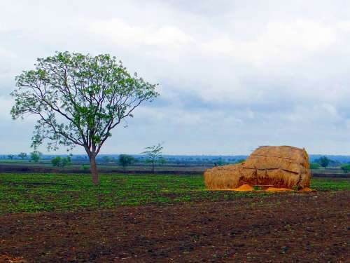 Black Cotton Soil Landscape Hay Stack Harvest