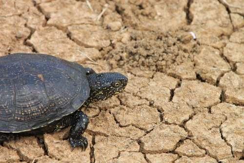 Black Claw Grass Green Reptilian Tortoises Turtle