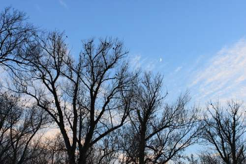 Black Crows Fall Flock Moon Sky Trees Autumn