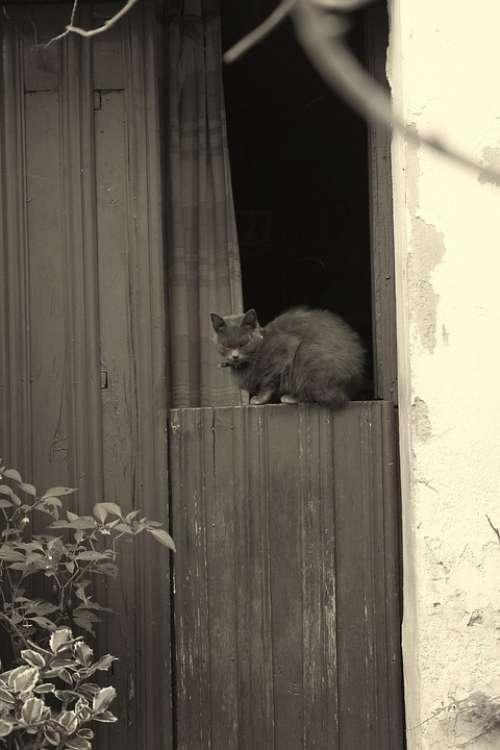 Black And White Cat Door Plasencia