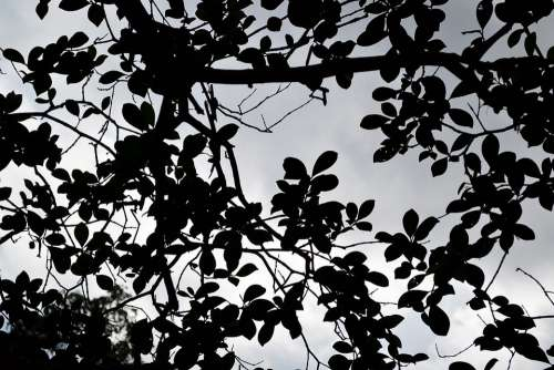 Black Leafs Clouds Haunted Mystery Quite Sri Lanka