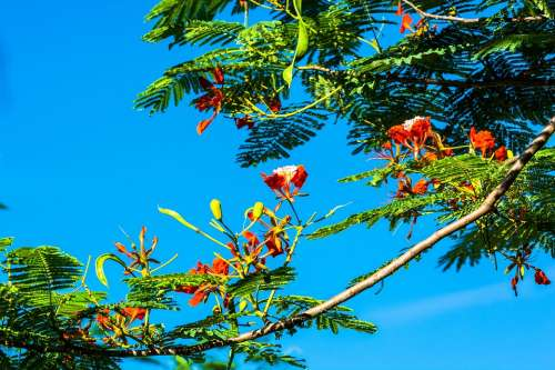 Blossom Blossom Bloom Red Tree