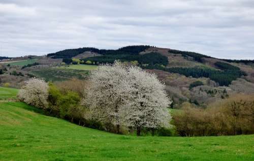 Blossom Tree Bloom Spring Luxembourg