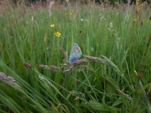 Blue Butterfly Spring