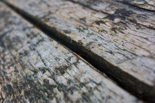 Board Wood Grain Old Texture Panels Bohlen