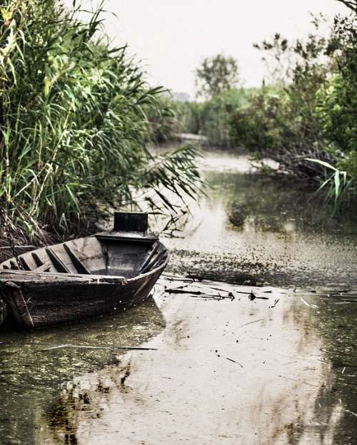 Boat Float Tub River Green Swamp Wood Nature