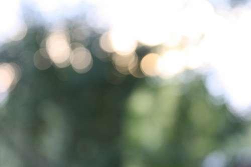 Bokeh Lights Sunset Blur Trees Sky Outdoor