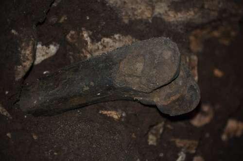 Bone Fossil Prahistoria Cave