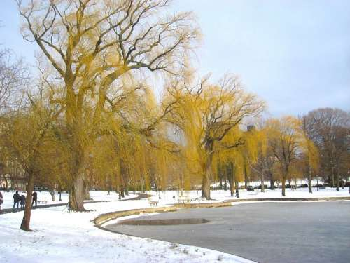 Boston Massachusetts Park Winter Snow Ice Trees