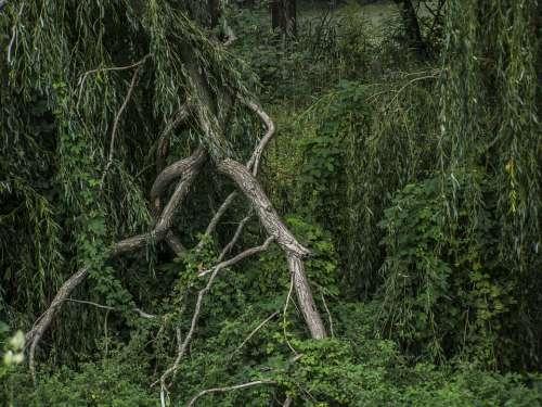 Bough Rotten Forest Landscape
