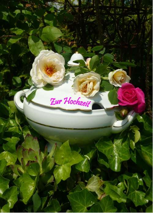 Bowl Congratulations Roses Romance Greeting Marry