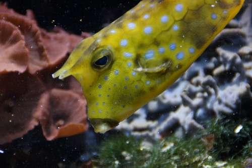 Boxfish Underwater Swim Fish Animal Water