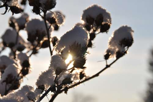 Branch Snow Backlighting Winter