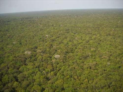 Brazil Amazon Equatorial Forest Green Flora