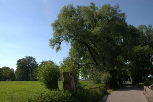 Bregenz Lake Constance Green Tree Meadow Nature
