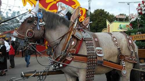 Brewery Horse Kaltblut Horse Draft Horse Workhorse