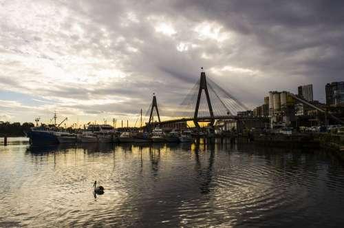 Bridge Water Pelican Landmark Scene Sunset