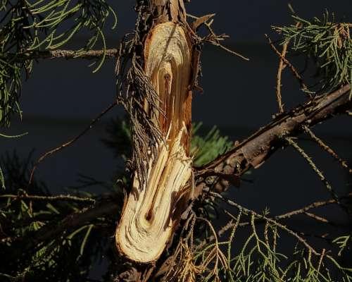 Broken Limb Snapped Branch Storm Damage Tree Shrub