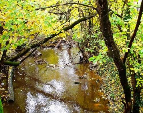 Brook Rivulet Trees Green Summer Water