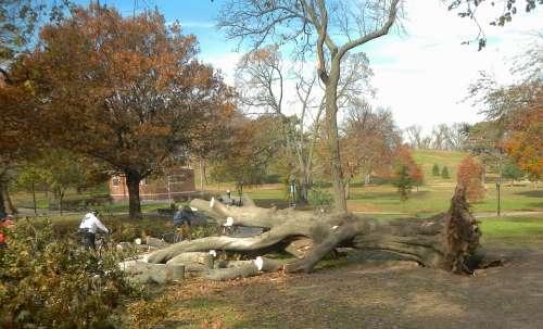 Brooklyn New York City Trees Men Working Cutting