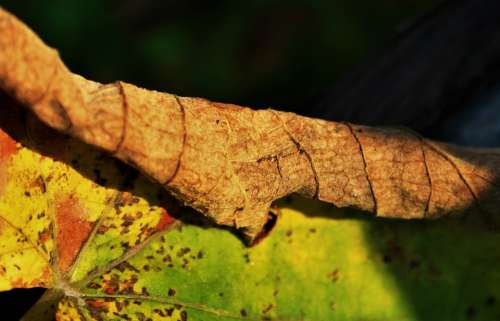 Brown Leaf Leaf Brown Green Yellow Dry Decaying