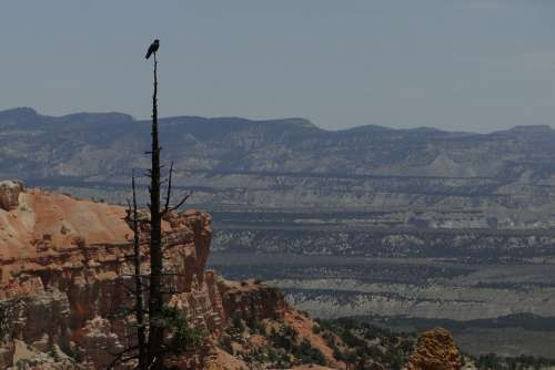Bryce Canyon Bird Wildlife National Park Desert