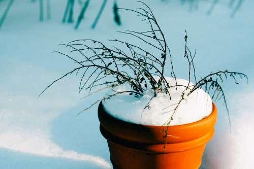 Bucket Flower Pot Snow Winter
