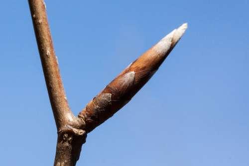 Bud Spring Frühlingsanfang Inflorescence Beech