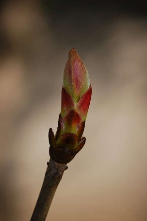 Bud Spring Branch Chestnut Nature