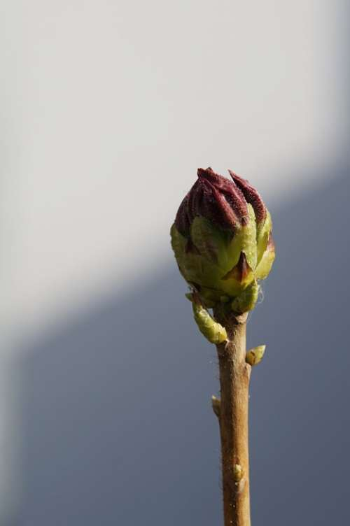 Bud Individually Engine Garden Nature Wait