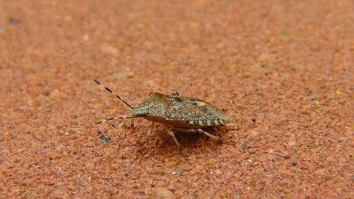 Bug Stink Bug Insect Animal Nature