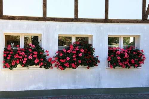 Building Window Flowers Flower Truss Fachwerkhaus