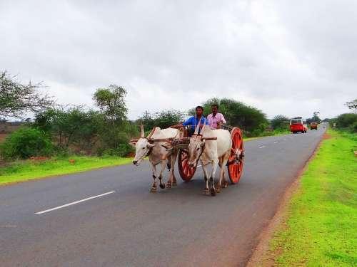 Bullock Cart Karnataka India Gadag Hubli Highway