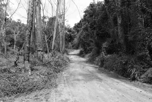 Bush Dirt Road Black And White Road Trees Nature