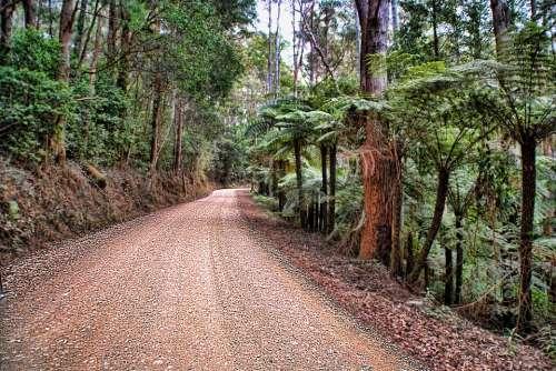 Bushland Road Dirt Road Ferns