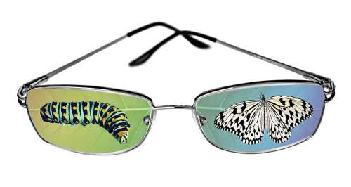 Butterfly Caterpillar Eyeglasses Lens Fantasy