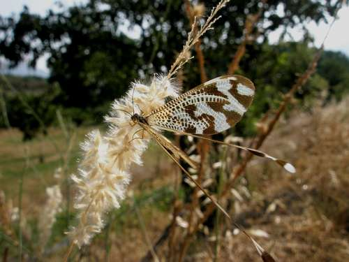 Butterfly Insects Nature Flower
