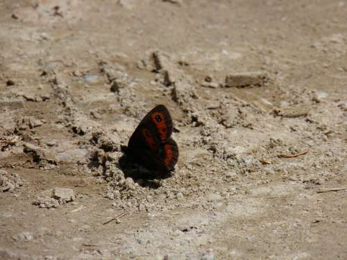 Butterfly Butterflies Sand