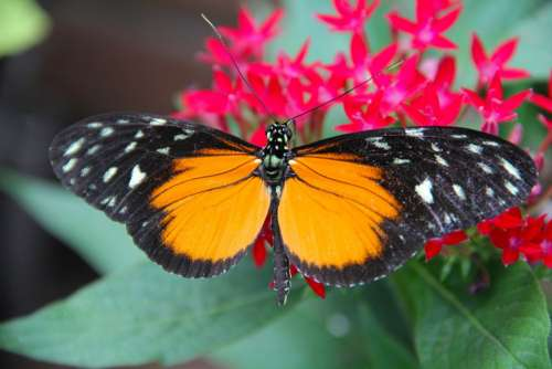 Butterfly Insect Flower Nature Orange Red