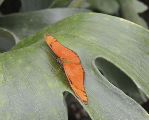 Butterfly Animal Insect Orange Macro