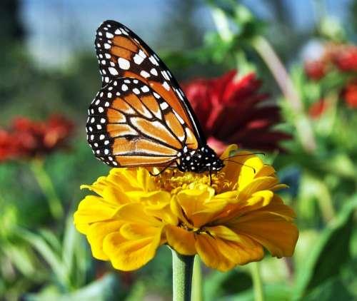 Butterfly Flowers Garden