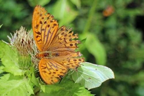Butterfly Orange Butterflies Wing Colorful
