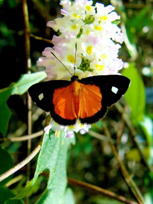 Butterfly Nature Insect Animals Orange Beautiful