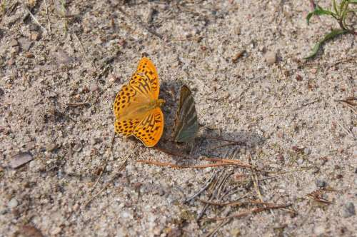Butterfly Nature Fauna Insect Wings Orange