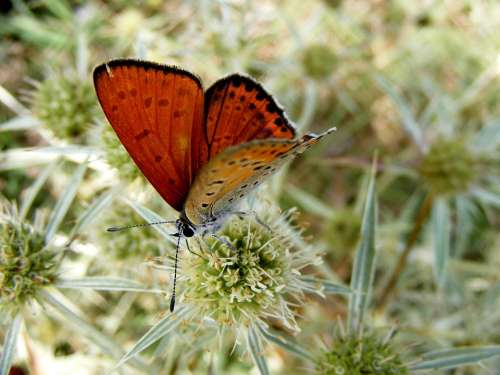 Butterfly Red Insecta Grass Flower Green Nature