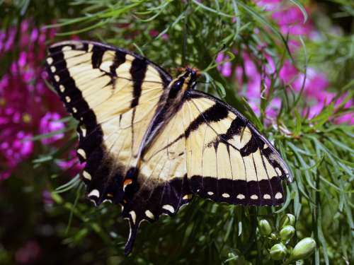 Butterfly Yellow Insect Nature Animal Flowers