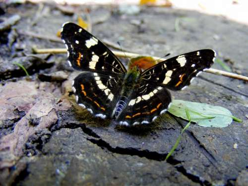 Butterfly Ground Nature Grass Insecta Coloring
