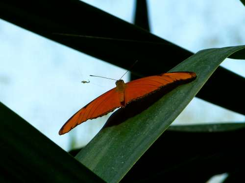 Butterfly Flying Wing Animal Insect