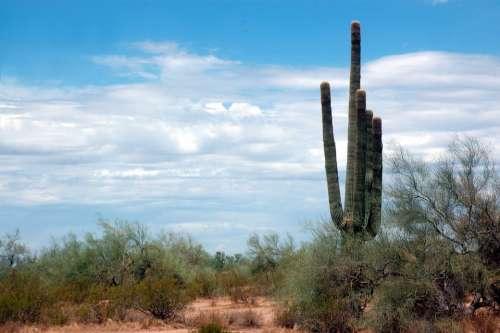 Cactus Sky Thorny Clouds